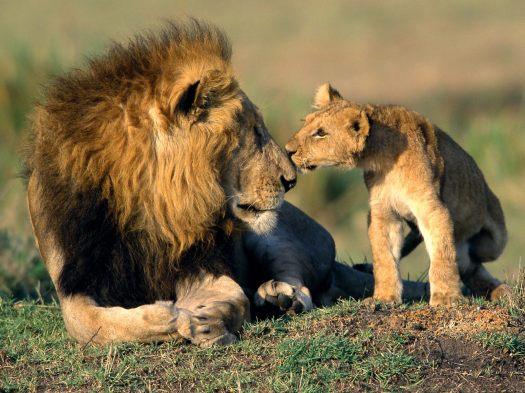 animals-cubs_00335559